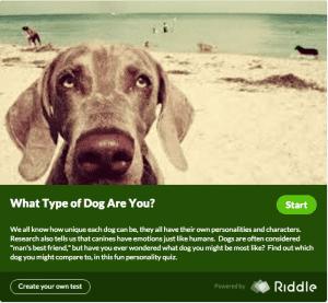 whattypeofdogareyou